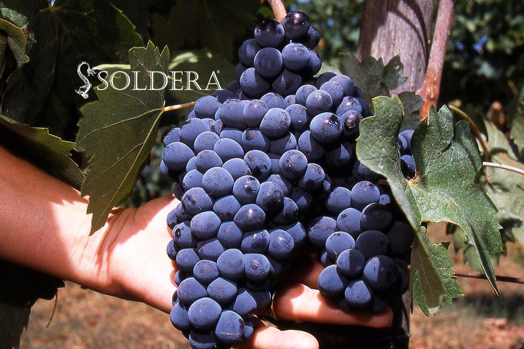 Soldera Case Basse azienda vitivinicola di Montalcino