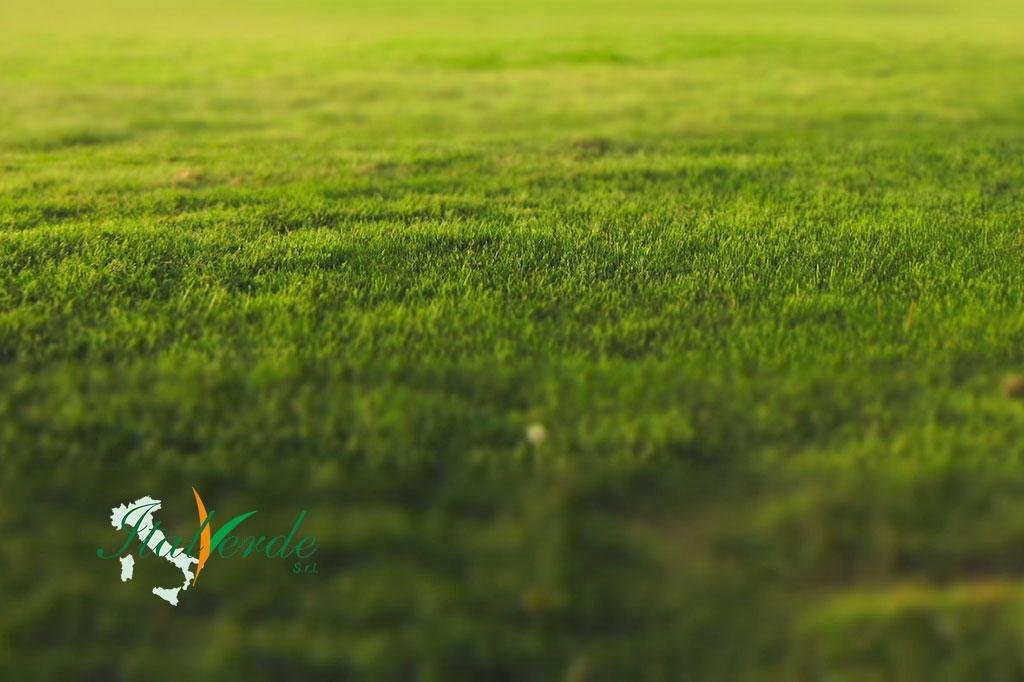 Italverde Srl manutenzione del verde a Lendinara Rovigo